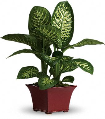 Ten Household Plants Dangerous to Dogs and Cats ... on