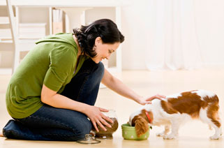 Salmon Creek pet clinic offers nutritional counseling for dogs and cats