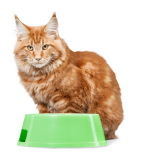 catfood.png