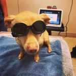 Class IV Laser Therapy – A surgery-free, drug-free, noninvasive treatment